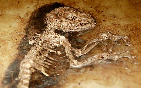 Fossilzed